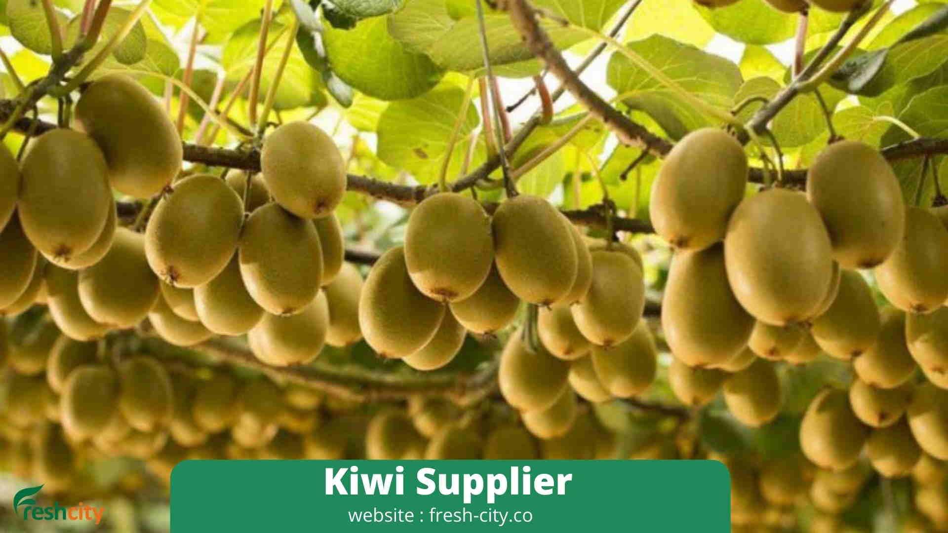 Kiwi Supplier